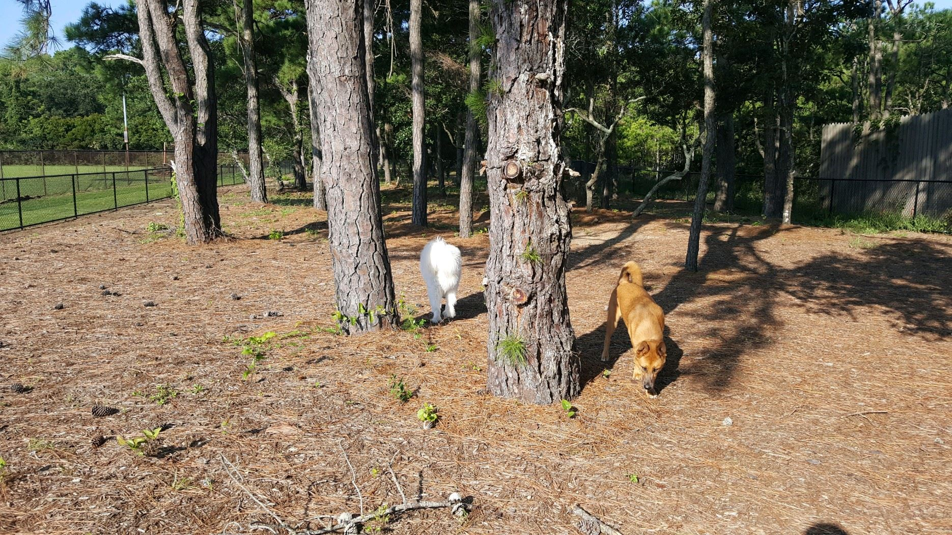 Dogs Walking Around Trees